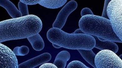 Foto de E se bactérias produzirem plástico?