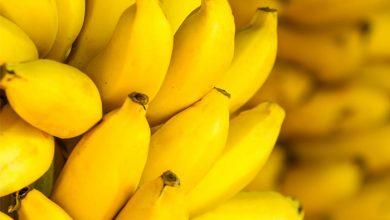 Foto de Plástico de banana gera renda para catadores