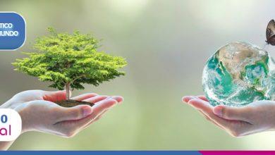 Foto de Plástico pelo Mundo: Árvore de Natal, The Recycled Island e muito mais