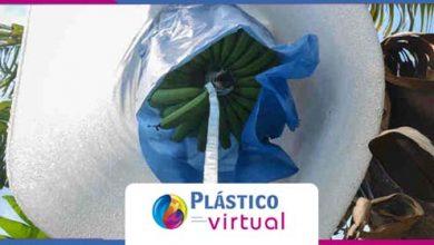 Foto de Universidade e empresas desenvolvem solução para ajudar produtores de banana