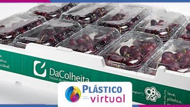 Foto de Embalagens em EPS aumentam a segurança de alimentos em produtos frescos